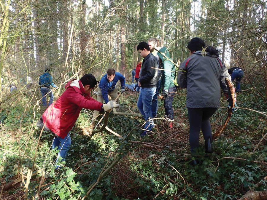 Students+work+to+clear+detritus+and+invasive+species+from+Gold+Park.